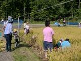 0922稲刈り3