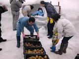 0317雪中野菜4