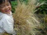 0812小麦2