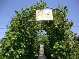 0814野菜トンネル1