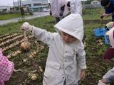 0918収穫祭たまねぎ2
