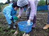 0918収穫祭たまねぎ4