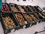 0317雪中野菜8