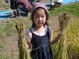 0923稲刈り1