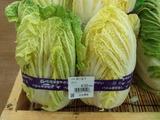 北広島産 白菜