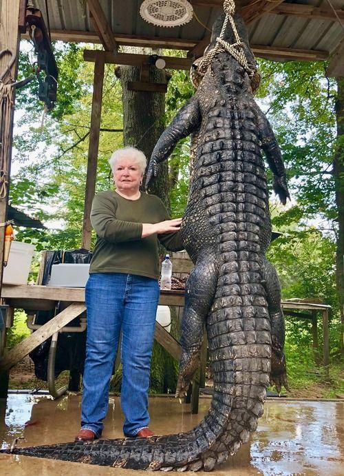 73歳のおばあちゃん、牧場の馬を食い殺した巨大ワニを射殺