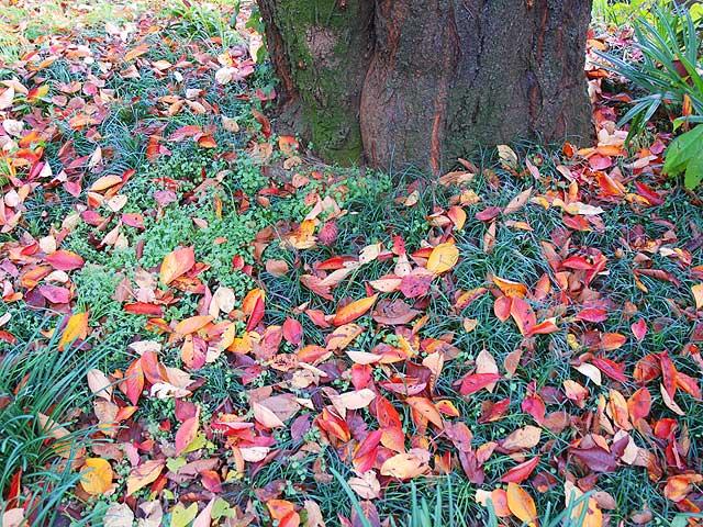 風景 Landscape 落葉 冬の風景 小石川植物園の風景 落葉