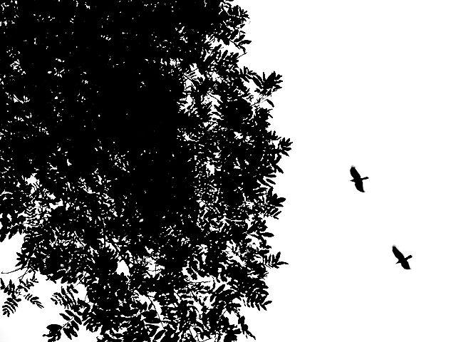 風景 Landscape カラス カラス 烏 からす Crow
