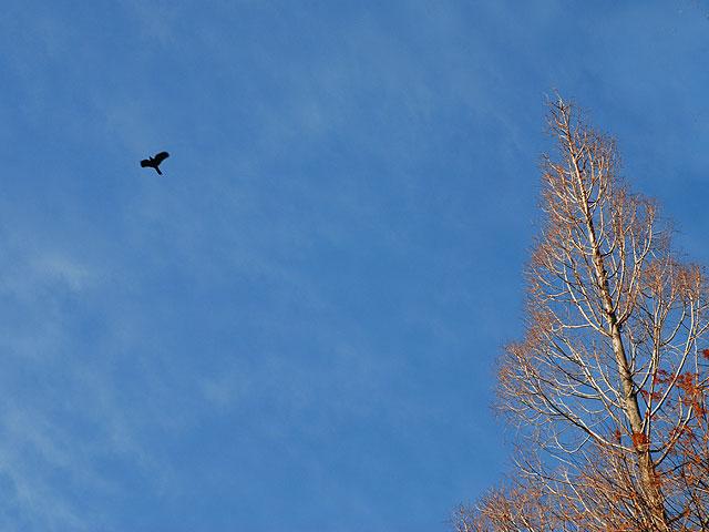 空 雲 (鳥 メタセコイア) 冬の空 メタセコイア 鳥