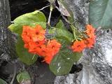 海辺の植物3