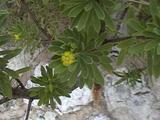 海辺の植物2