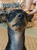 頭周り測定顎下を通っています