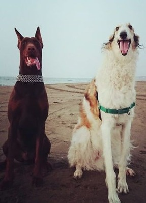 海辺で座るドラーク君とシェルガ君