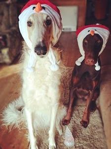 クリスマスの仮装をするドラーク君とシェルガ君