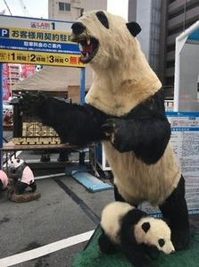 パンダの剥製3