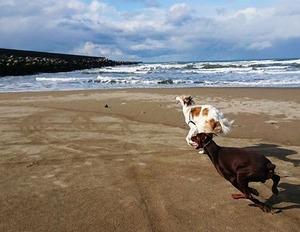 海辺を走るドラーク君とシェルガ君