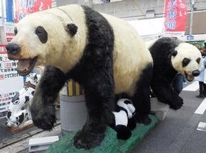 パンダの剥製i2