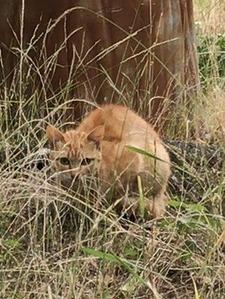 草むらから見つめるネコ