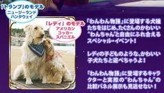レディとトランプのモデル犬
