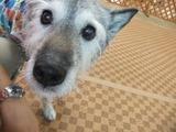 ドッグトレーナー斎藤さんのパートナー犬アッシュ君