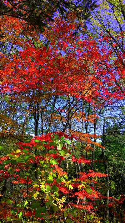 紅葉の写真2
