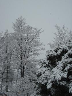 草津温泉の雪の写真