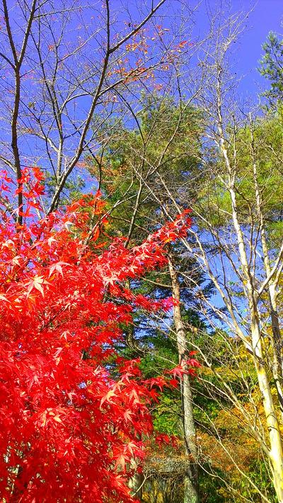 紅葉の写真4