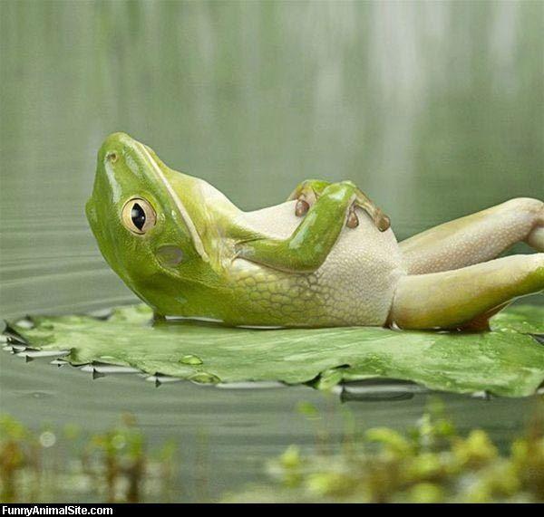 お腹をかかえるカエルがかわいい