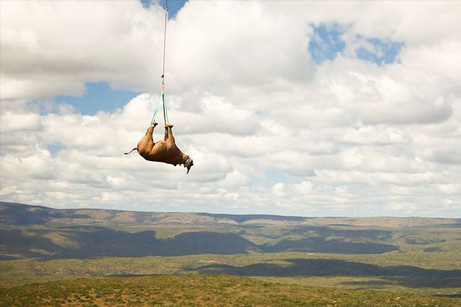 rhino-air-lifted-helicopter-aerial_43387_big
