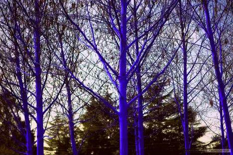 blue-trees-4