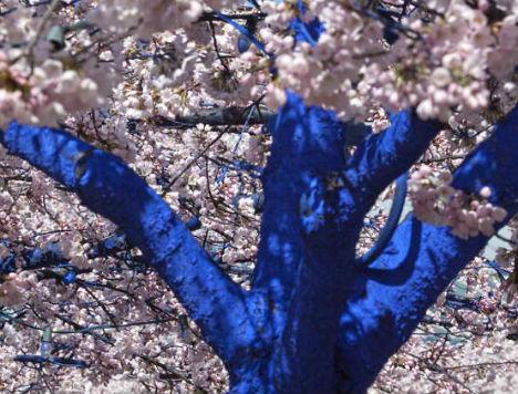 blue-trees-1