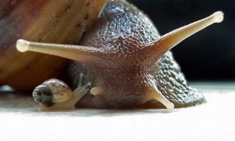 mother-snail-vs-baby-snail