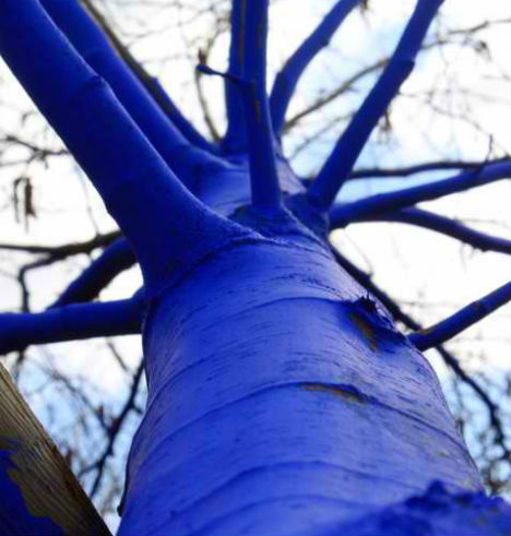 blue-trees-5