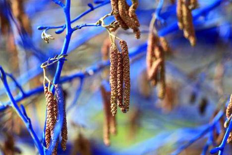 blue-trees-6
