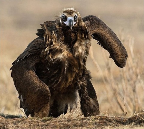 ugliest-bird-alive