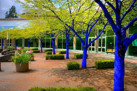 blue-trees-2