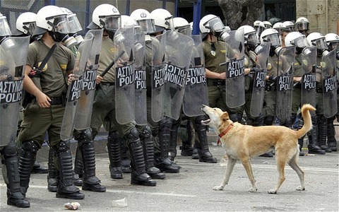 greece-riot-dog-62_1927011i