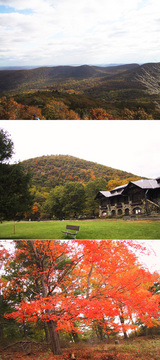 red leaves and mountain view
