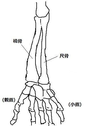 bone02