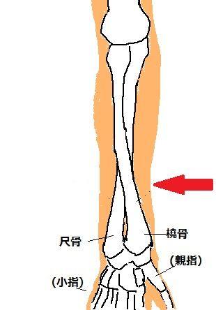 bone03