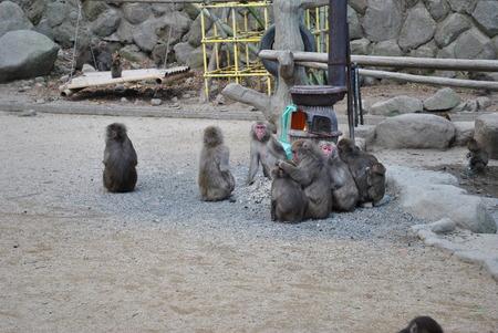 ぽかぽか温ったまる写真 【猿だんご】