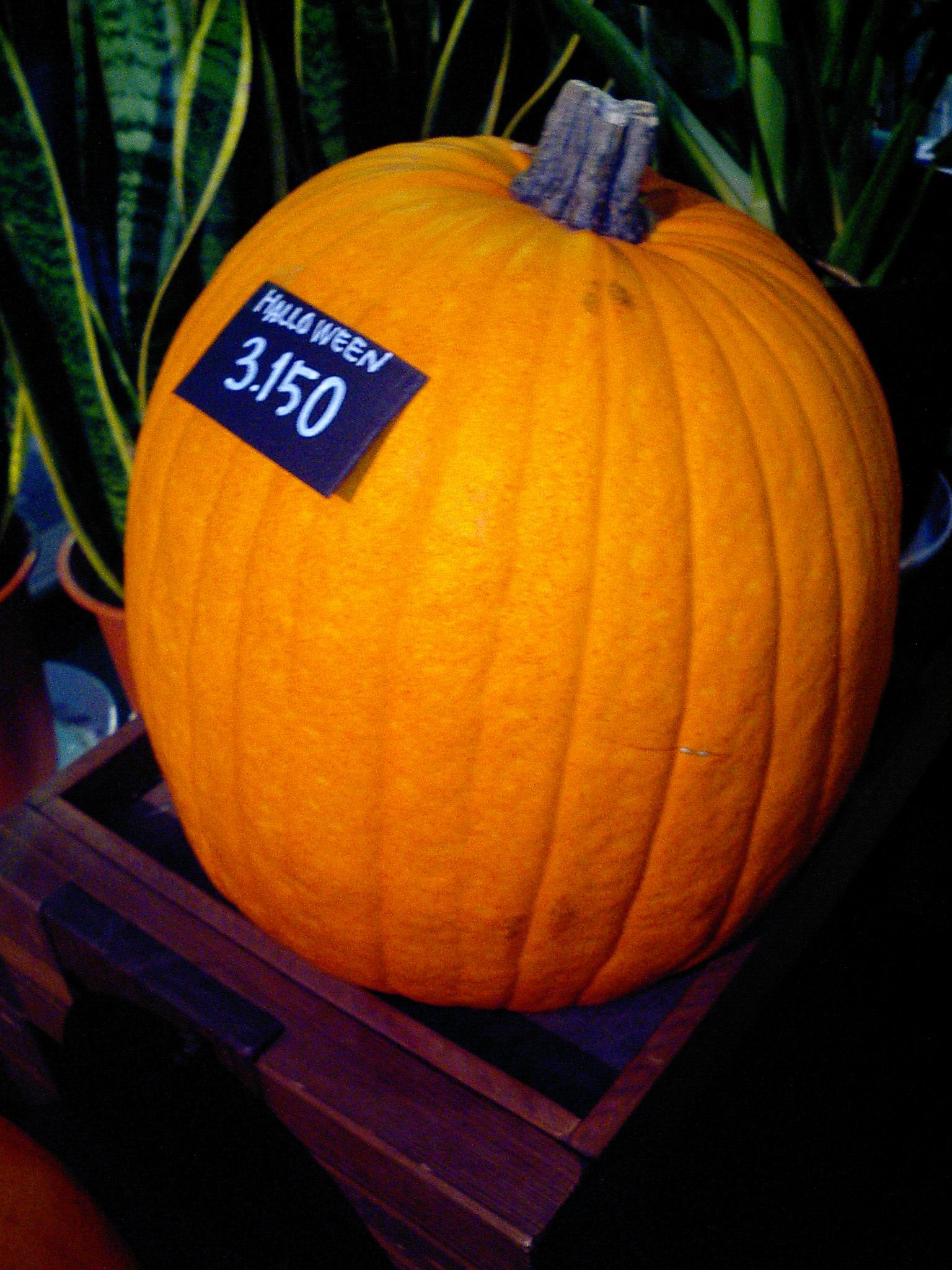 私、今まで、ディスプレイ用のおもちゃのようにかわいいかぼちゃとか、ジャック・オ・ラタンって、どこで売っているんだろうと思っていたのですが、お花屋さんで  ...