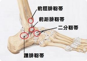 足関節靭帯3