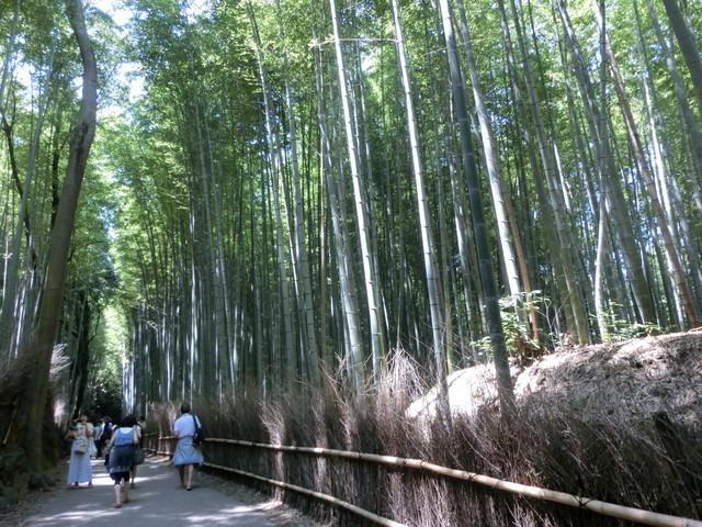 2013年 8月 京都 282
