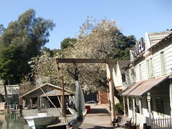 2012 1月 ロサンゼルス 193