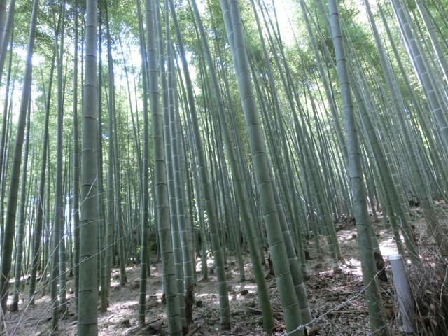 2013年 8月 京都 281