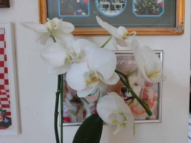 2013年6月めぐちゃん結婚式&山梨 004