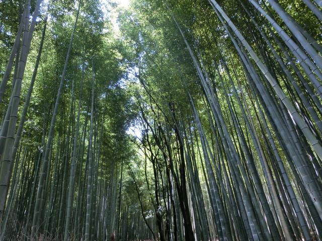 2013年 8月 京都 280