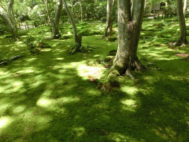 2013年 8月 京都 258