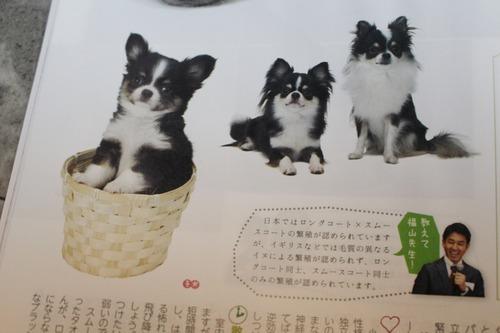 犬のカタログ